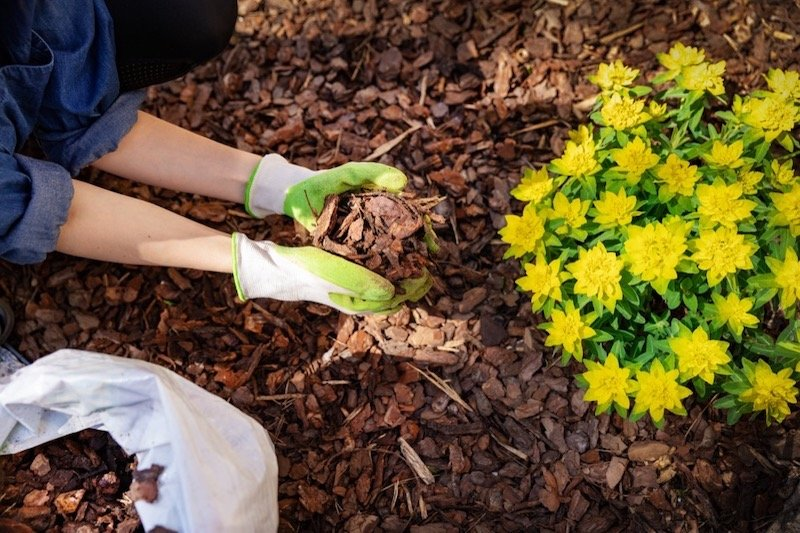Mulch Tips and Tricks